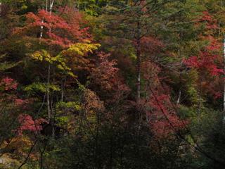 八千穂自然園