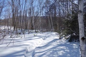 白樺の小径