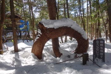 ネジネジの木