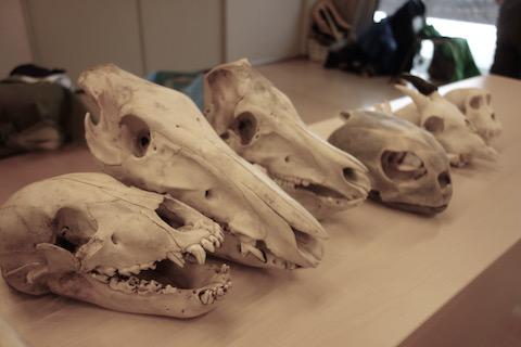 野生動物の痕跡を辿るアニマルトラッキング