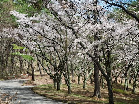 上田市 市民の森